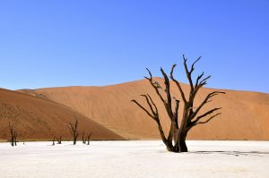 Paradisläckan – När är det tillräckligt?