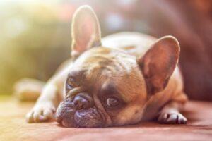 Beskatta hundarna (igen)